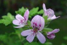 ! Herbal Remedies