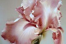 P-Rózsaszín-Fleurs porcelain &..... / CSODÁLATOSAK rózsák, és minden rózsaszínben