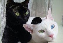 [ kitty kitty ] / by Sil Naranjo Sherman