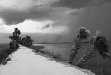 McQueen's Island Historical Trail, Savannah, Ga. / Rails to Trails in Savannah, Ga / by Dan Hernandez