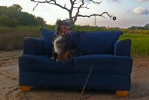 couch / by Dan Hernandez