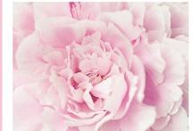 Blooming fabulous