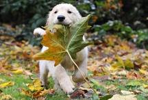 Autumn <3 syksy