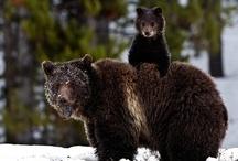 bears / by Dan Hernandez