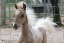 Animals - Horse, Mule, Donkey, Zebra, Etc.
