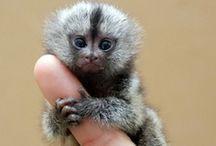 Animals - Monkeys, Gorillas, Etc.