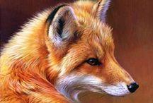 Animals - Wolf, Fox, Wild Dogs, Etc.