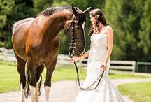 Theme: Equestrian Weddings / The perfect wedding theme for the horse-loving couple!  Find all kinds of equestrian themed wedding ideas!