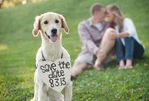 Ideas: Save The Date / Find fun ideas for wedding save the date cards, magnets, etc. / by Wedding Favors Unlimited