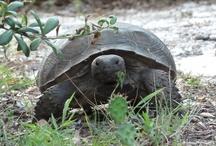 Florida Natives / Florida as Nature and Nurture...