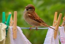 ~~~ Washing Day ~~~ / Busy  Days / by Carmel-Anne O'Reilly