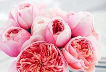 Favoritt flowers