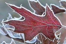 Invierno/Winter