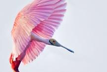 feathery hide / by Elmo Siap