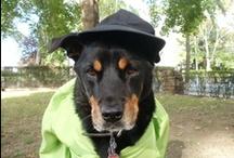 The Fairytale Estate Pup