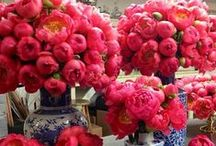 Coral Peonies / A bright pop of color in any wedding bouquet or design.   #peony #wedding #coralpeony