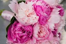 Pink Peonies / From Dark Pink to Blush, what a color range the pink peony can be found in!  #peony #pinkpeony #wedding