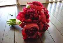 Red Peonies / Red peonies make a statement!  The color, fragrance and size of the bloom make them the perfect flower for any wedding bouquet!  Available year-round!