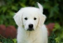 Maximum dog / Maxi para los amigos. Maxi for friend. Mi perro. My dog.