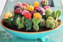My Tiny Secret Garden / Ideias para ter um pequeno jardim em apartamento | Jardim Vertical | Vasos e potes