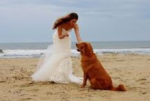 Weddings and Pets / Including your Pets in your Wedding? Lot's of beautiful ideas!