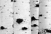 Colour Black and White