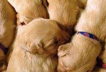 Animals;-)