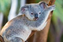 My Australia Trip / 私のオーストラリア旅行