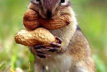 Nuts noten
