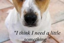 Make Something for Your Pet / Your pet is going to know you made him something with love in your heart.