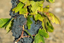 Wines from the Grape Blends of The Rhone Valley,France / Stunning wines from around the world originating from the Rhone Valley in France