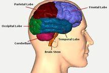 Tramatic Brain Injury (TBI) Resource / #TBI #Injury #Concussion