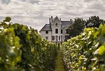 Wine & Travel / The best places to travel to and drink wine