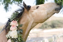 horses / by Donna Anderson