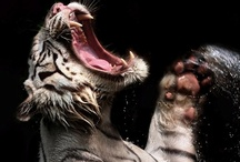powerful animals / by Donna Anderson