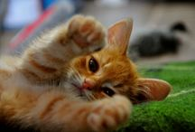 Catz / Macskáim.macskasmindenfele