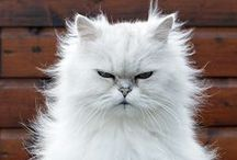 Cat, I'm a kitty cat! And I meow meow meow and I meow meow meow