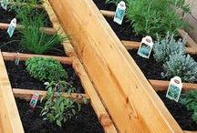 Gardening / tips and guidelines for gardeners