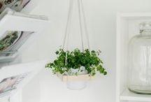 Green Energy / indoor plants