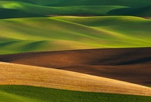 Patterns . nature / by Joana Cid