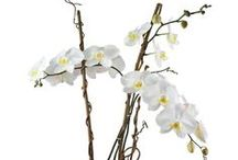 Miami Plant Gifts  / Orchid Plants, Bamboo Plants, Flowering plants, green plants, dish garden plants