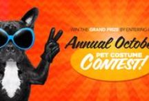 Pet Costume Contest / Celebrate your pet's cuteness! Enter to win our Pet Costume Photo Contest for a chance to win a basket filled with trick-or-treat worthy snacks! The contest ends on October 30th, so pick out those costumes, snap a pic and enter to win today on http://bit.ly/1yhvhOW!   Here are some costume ideas to get you on your way to costume greatness.