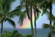 Hawaii / by Betty Metro