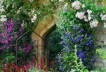 Secret Garden / by Betty Metro