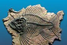 Bone & Fossils
