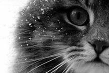 """♥♥chat♥♥ / Tout ce qui concerne les chats, livre, image, .... Chaton, chat.... Le seul mot est """"mignon"""" !!!!♥♥♥♥♥♥"""
