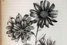 flora&fauna vintage illustrations
