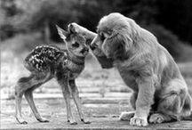 la tendresse des animaux / Parce que les animaux même sauvages nous surprennes souvent pas leur tendresse ! Et leurs relations inédites avec d'autres animaux.