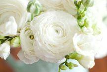 Wedding / by Deanna Howard