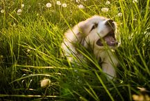 All about MillI! Our Great Pyrenees